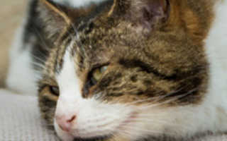От чего у кота понос и рвота