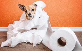 Чем вылечить собаку от поноса