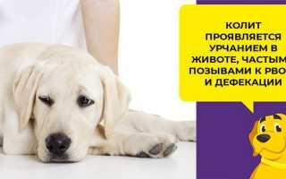 Понос и слизь в кале у собаки