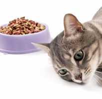Что давать коту при гастрите