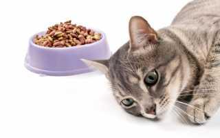 Чем лечить гастрит у котенка
