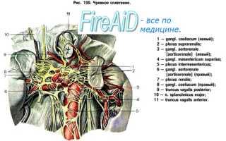 Регуляция моторики кишечника