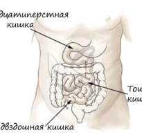 Тонкий кишечник как и пищевод
