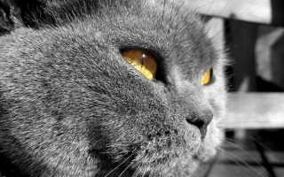 Понос и рвота у кормящей кошки