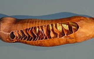 Спиральный клапан в кишечнике