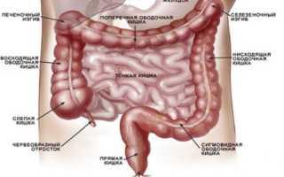 Толстый кишечник строение фото