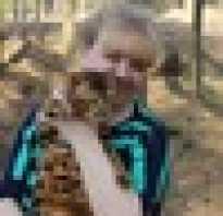 Понос у бенгальского котенка
