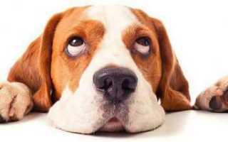 Препараты для собак от диареи