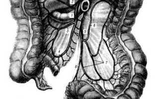 Толстый кишечник кровоснабжение