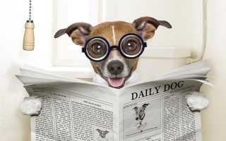 У собаки понос и урчит живот