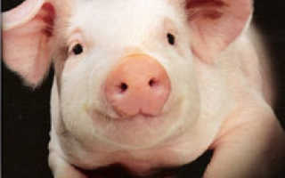 Постная свинина при панкреатите