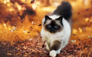 Чем кормить при гастрите кошку