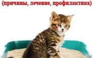 У кошки понос коричневого цвета