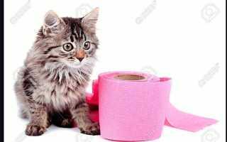У домашнего кота понос и рвота