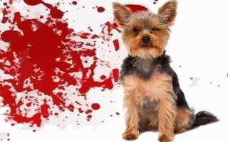 У собаки понос слизь с кровью