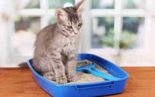 Понос после запора у котенка