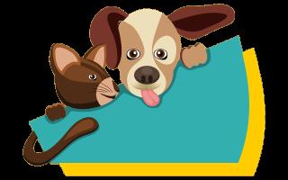 Понос у собаки от сырого мяса