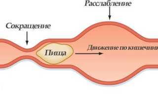 Регулятор моторики кишечника
