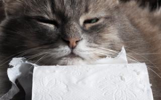 Понос после празицида у котенка