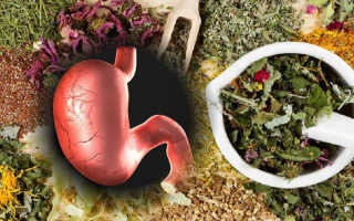 Травки для желудка и кишечника