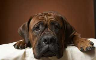 Проблемы с кишечником у собаки