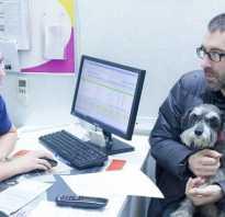 Проблемы с кишечником у собак