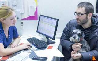 Проблемы с кишечником у щенка