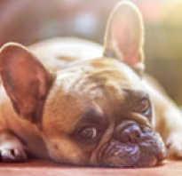У собаки обострение гастрита