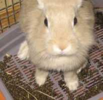 Понос у кролика как выглядит