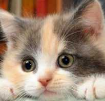 Пробиотики для котят при поносе