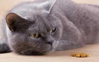 Проблемы с кишечником у кота