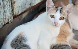 Почему понос с кровью у кошки