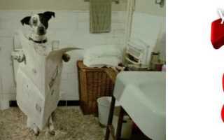 Рвота водой и понос у собаки
