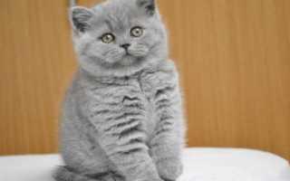 Что делать с поносом у котенка