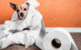 Сухой корм собаке при поносе
