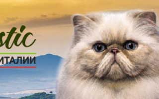Рак кишечника симптомы у кошки