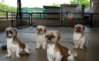 Понос у собаки при панкреатите