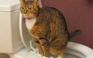 У кошки понос и недержание кала